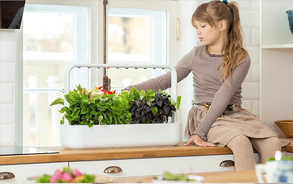 смарт-огород на кухне